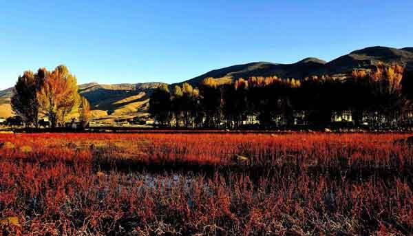 稻城亚丁桑堆红草地