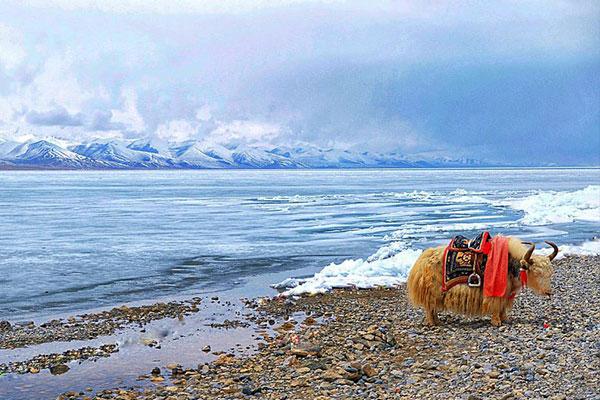 成都租车去西藏旅游
