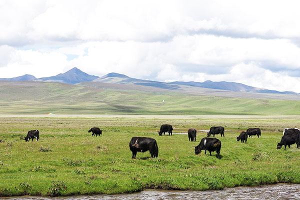 红原大草原