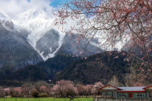 三月林芝桃花节从成都租车自驾西藏多少钱?