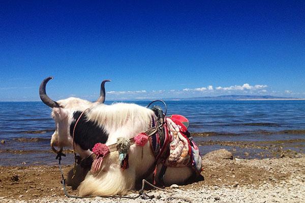 """青海湖:避暑胜地!一个古称""""西海""""的地方"""